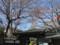 蓮光院 南池袋 桜 2009
