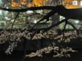 江戸川公園 神田川 桜並木 2009