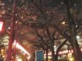 播磨坂 さくら並木 夜桜 茗荷谷