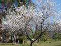小金井公園 桜 ハナモモ 2009