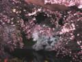千鳥ヶ淵 桜 ライトアップ 2009