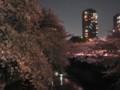 神田川 桜 2009 面影橋