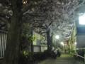 神田川 桜 2009