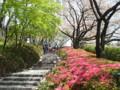 赤プリ グランドプリンスホテル赤坂 桜 つつじ 2009