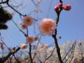 梅 池上梅園 大田区 2010