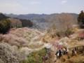 吉野梅郷 梅の公園 青梅市 2010