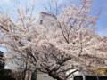 新宿御苑前の桜 100327