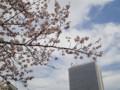 廃校の桜 100401