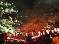 上野公園 夜桜 100401