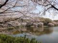 三ッ池公園 桜 2010