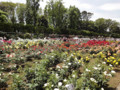神代植物公園 2010 バラフェスタ