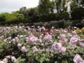 神代植物公園 2010 バラフェスタ ブルームーン