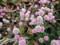 多摩川河川敷 花 紫