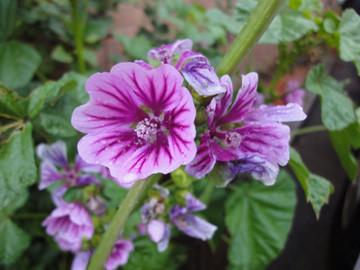 マンションのお花