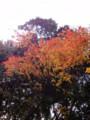 深大寺 紅葉 20101128