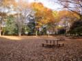 神代植物公園 神代公園 紅葉 落ち葉 20101128