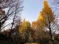 神代植物公園 神代公園 銀杏 イチョウ 20101128