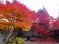 神代植物公園 神代公園 紅葉 モミジ 20101128
