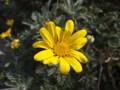 公園のお花1