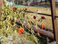 松屋銀座 屋上菜園 冬