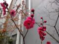 梅の花 蔵前のお宅