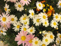 そごう ガーデニングイベントのお花