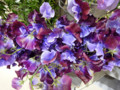 青山フラワーマーケットのお花