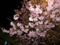 近所の公園の夜桜 20110405
