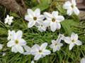豊川稲荷のお花