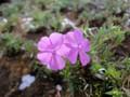 赤坂警察署のお花