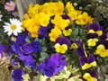 ホテルモントレ赤坂のお花