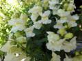 オムライス屋さんのお花