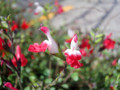 赤坂見附 交差点のお花