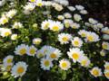 駅前のお花