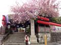 豊川稲荷 赤坂 桜