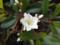 赤坂見附のお花