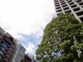20110601 青空 樹木