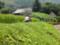 遠野の風景 畑仕事