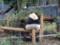 111021 上野動物園 シンシン