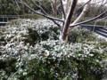 120229 都心 積雪