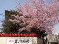 20120402 赤坂豊川稲荷の桜