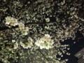 20120405 夜 虎ノ門の桜