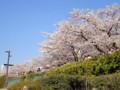 20120408 浅草 隅田川沿いの桜