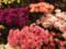 母の日 カーネーション 青山フラワーマーケット
