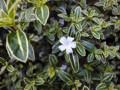 丸の内 一号館広場の花