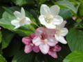 洗足池のお花