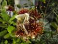 日比谷公園のお花
