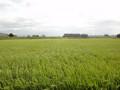 120815 田舎の風景 田んぼ