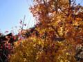 昇仙峡 夫婦木神社 紅葉