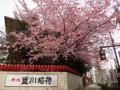 20130320 豊川稲荷 桜